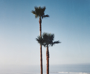 beach, palms, and sea image