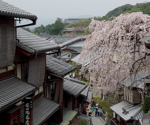 cherry blossoms, japan, and Houses image