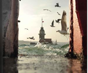 istanbul, sea, and bird image
