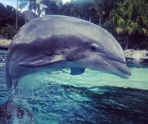 adorable, dolphin, and fabulous image