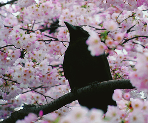 crow and flowers image