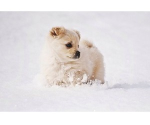 puppy, snow, and cute image