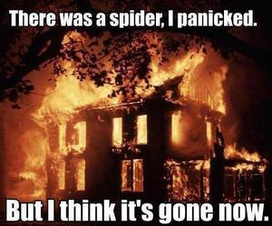 spider, funny, and fire image