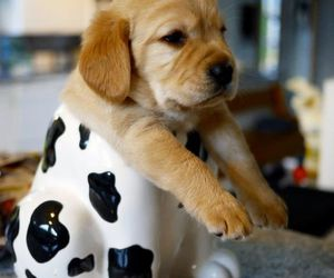 adorable, funny, and cute animals image