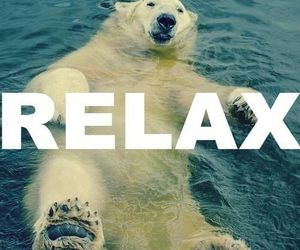 relax, bear, and animal image