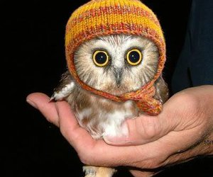 adorable, owl, and hat image