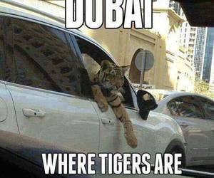 Dubai, dog, and tiger image