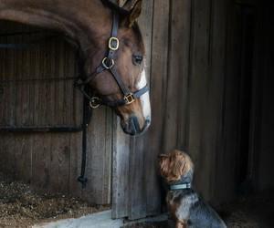 dog, horse, and animals image