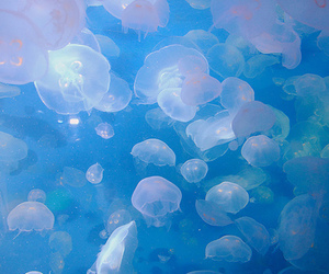 jellyfish, blue, and sea image