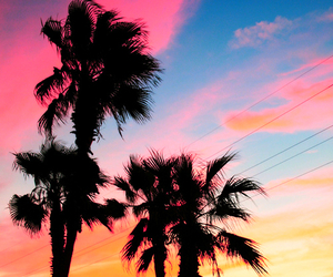 beautiful, colors, and palmtree image
