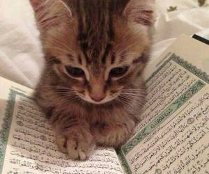 cat, islam, and animal image