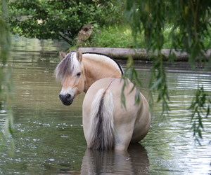 beautiful, chevaux, and free image