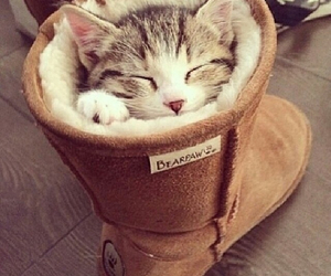 boot, kitten, and cat image