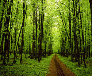 tree, green, and forest image