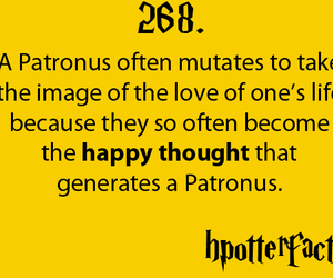 fact, harry potter, and potter image