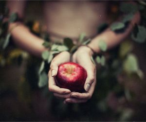 apple, hands, and nature image