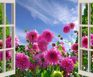 fiori meravigliosi image