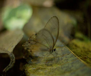 butterfly and sam abell image