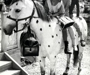 horse, pippi, and old image