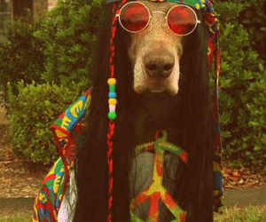 dog, hippie, and peace image