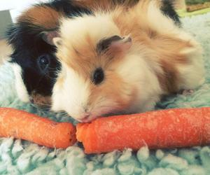carrot, bestfriends, and guineapig image