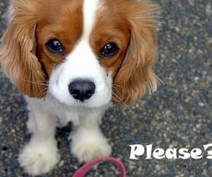 please, puppy, and cute image