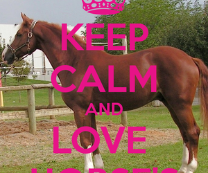 horses and love image