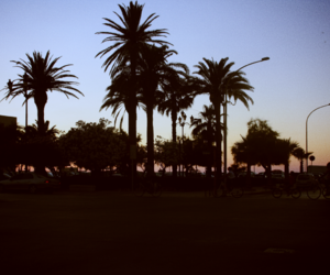 italy, palm, and palmtrees image