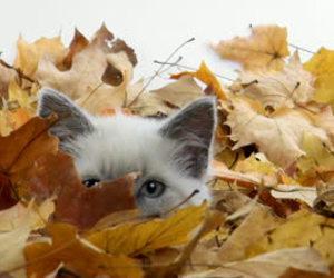 autumn, cat, and kitten image