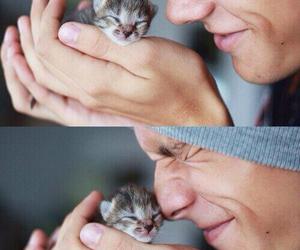 animal, kitten, and animallovers image
