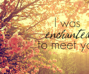 enchanted, quote, and Taylor Swift image