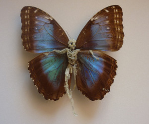 butterfly, blue, and skeleton image