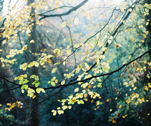 nature, tree, and leaves image