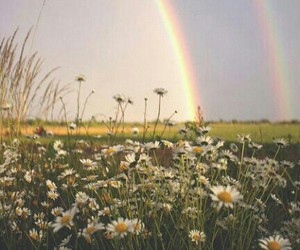 rainbow, flowers, and landscape image