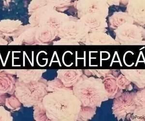 vengachepaca, frases, and flores image