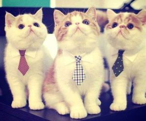 cats, cute, and Gatos image