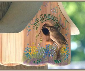 bed and breakfast, bird, and birdhouse image