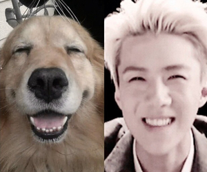 doggy, exo, and golden retriever image