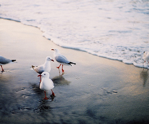 sea, beach, and bird image