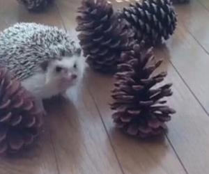 hedgehog, cute, and marutaro image