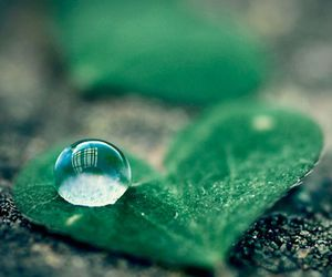 leaf, photography, and water image
