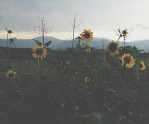 background, beautiful, and depressive image