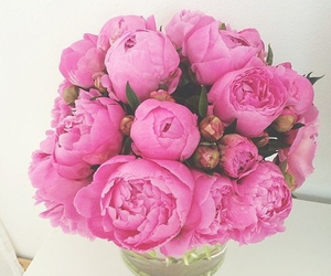 flowers, beauty, and pink image