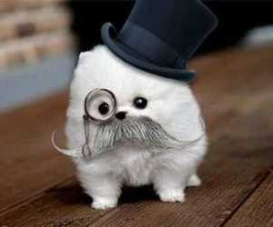 mustache, effing cute, and feel like a sir image