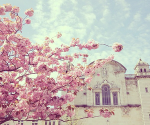 pink, flowers, and sky image