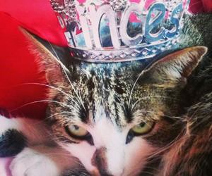 princess cat and luna cat image