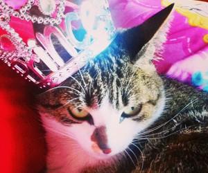 animals, cat, and princess cat image