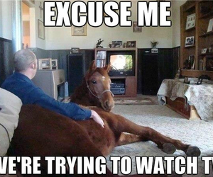 divertido, funny, and horse image