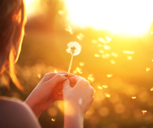 wish, Dream, and flower image