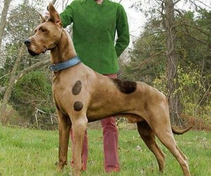 dog, scooby doo, and scooby image